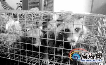 海口私人渔船非法运输野生动物上岛 被查获放生