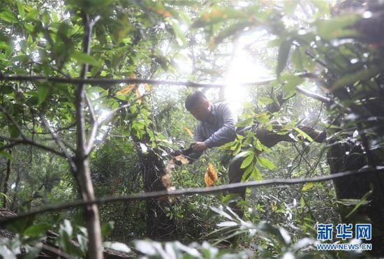 7月19日,保护区工作人员米红旭在拍摄疣斑树蛙卵。新华社记者 王军锋 摄