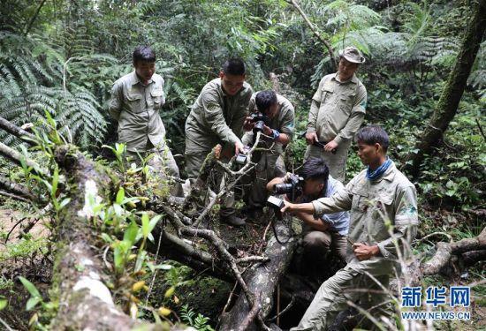 7月19日,考察队员在鹦哥岭拍摄兰花。新华社记者 王军锋 摄