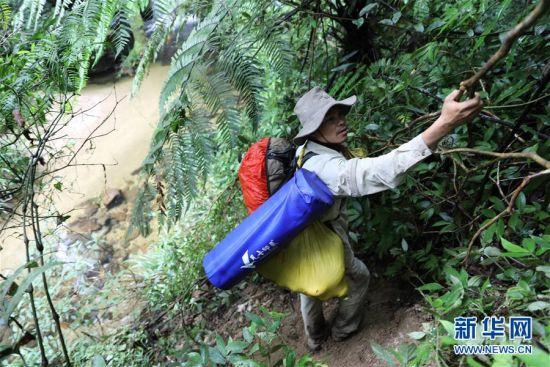 7月19日,一名护林员拽着树枝下陡坡。新华社记者 王军锋 摄