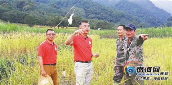 省农科院的水稻专家(左二)与农民沟通种植事宜。 (省农科院提供)