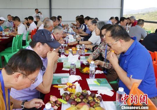 参加峰会的台商代表在三亚台资企业的芒果种植基地品尝热带水果。 王晓斌 摄
