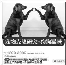 在一些网络分享平台上,有网友分享克隆宠物的日记、视频