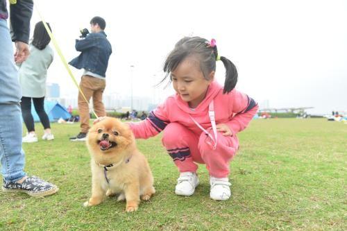 有家长特意带孩子到共享公园与小狗玩耍,体会成为宠物主人的感觉。图片来源:香港特区政府新闻网