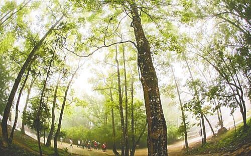 五指山市水满乡热带雨林风景区。本报记者 陈元才 摄