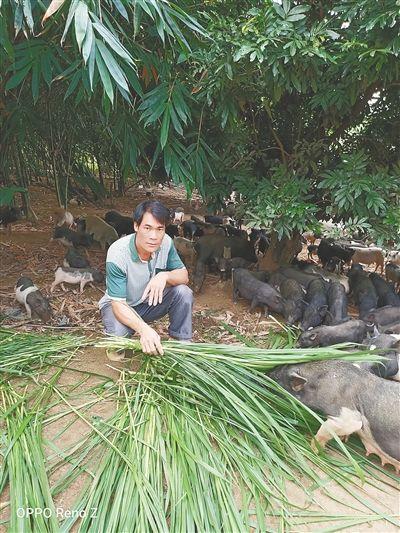 李桂胜在喂养五脚猪。 本报记者 曾毓慧 摄
