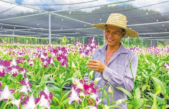 保亭黎族苗族自治县南林村发展兰花产业,助农民增收。 本报记者 武威 摄