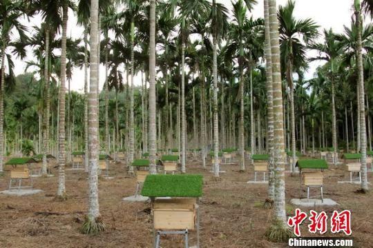海南省琼中黎族苗族自治县打造养蜂科普(扶贫)示范基地,帮助贫困户科普养蜂知识和技术。 朱德权 摄