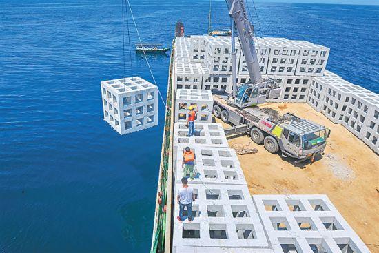 文昌冯家湾海洋牧场建设项目投放人工渔礁。海南日报记者 袁琛 摄