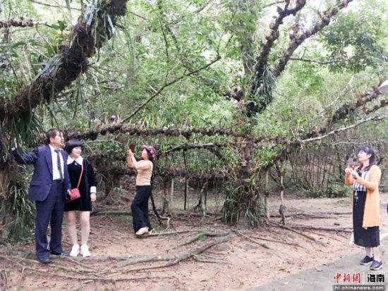 图为万宁兴隆热带花园参观。凌楠 摄