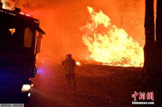悲伤!澳林火或致2000只考拉被烧死 栖息地损害严重