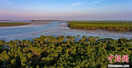 图为航拍海口东寨港红树林保护区。 骆云飞 摄
