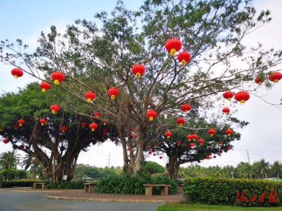万绿园挂起红灯笼,祥和喜庆。