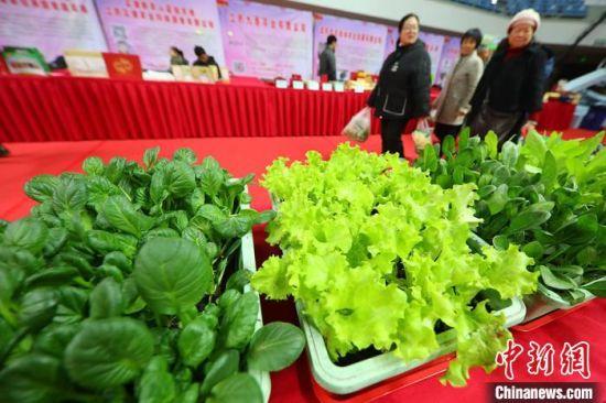有机型盆景蔬菜吸引民众目光。 泱波 摄