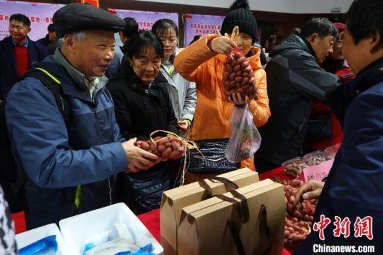 春节将至,农业科技新成果新产品嘉年华活动人气爆棚。 泱波 摄