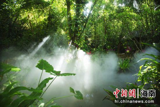 呀诺达雨林谷景观 景区供图