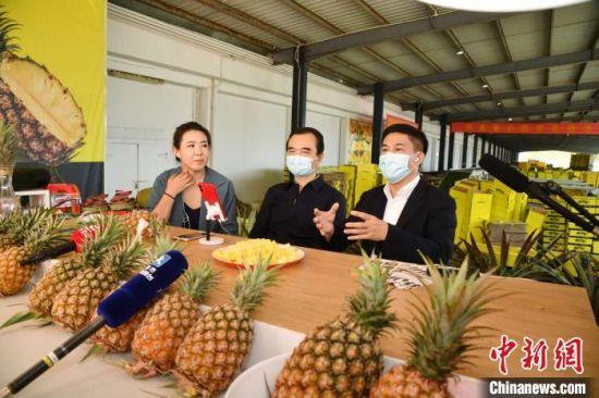 海南文昌市委书记钟鸣明(右一)、市长王晓桥(中)在直播平台推介该市金钻凤梨等优质农产品。 潘高 摄