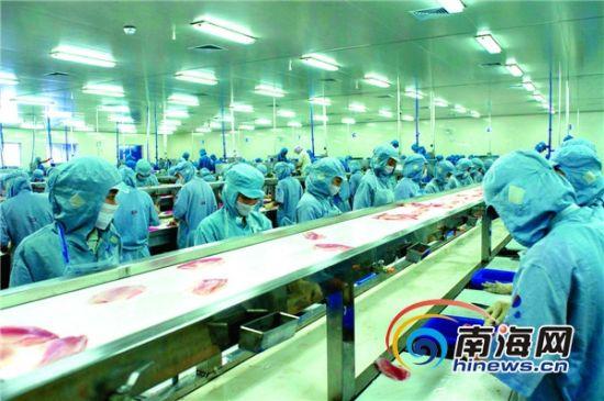2月中旬,翔泰渔业复工时员工100%到岗。首席记者 康景林 摄