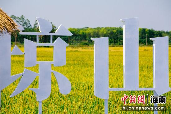 金灿灿的稻谷尽收眼底。凌楠 摄
