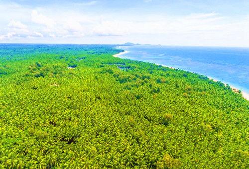 海岸椰林旅游胜地文昌东郊椰林