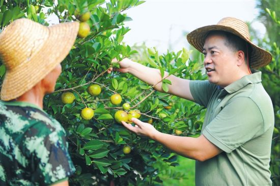 澄迈退伍军人王笃雄发展山柚油产