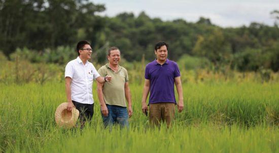 黄海军(左)、曹文超(右)正在田间观察村里红米水稻的长势。孟凡盛摄