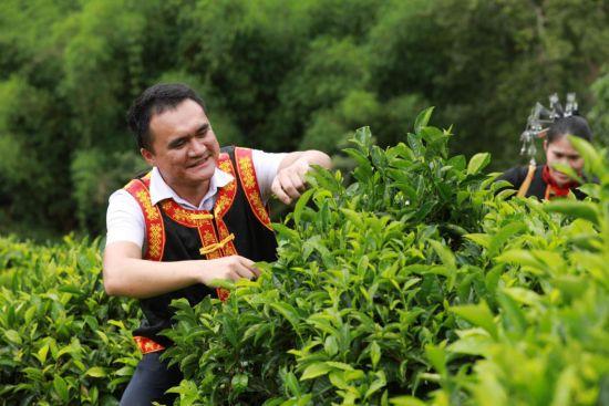 水满乡的茶园里,黎族、苗族同胞正在采茶。孟凡盛摄