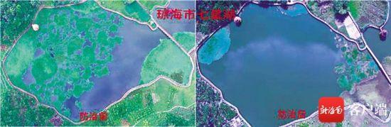 琼海七星湖防治水葫芦前(左图)后对比。(张文锋 供图)