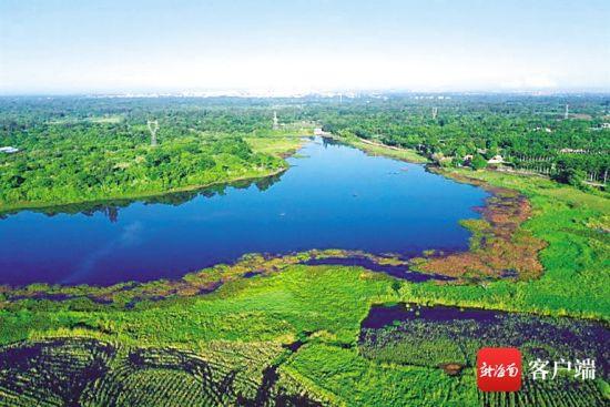 请走水葫芦,海口那央湿地水清了。(张文锋 供图)