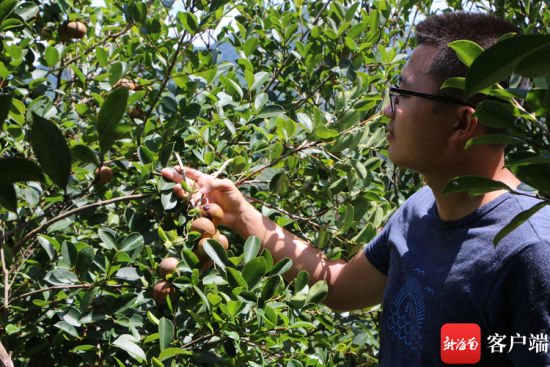 王辉浩在基地里查看油茶长势。记者 苏桂除 摄