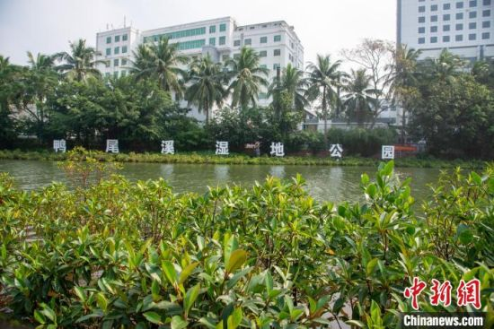 海口鸭尾溪湿地公园水清岸绿。凌楠 摄