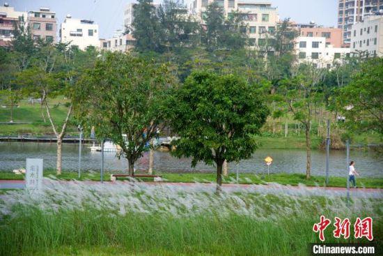 市民在海口美舍河凤翔湿地公园的美舍河旁散步。凌楠 摄