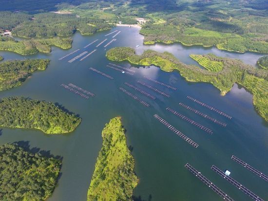 海南翔泰渔业股份有限公司罗非鱼养殖基地。企业供图