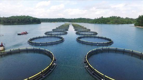海南翔泰渔业股份有限公司养殖基地。企业供图