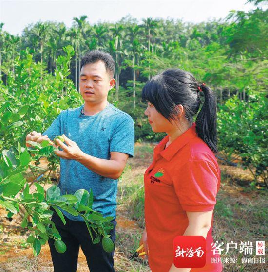 在位于海口市琼山区大坡镇美仁丰村的柠檬种植园,吴敏(左)在指导职工管理柠檬。海南日报记者 邓钰 摄