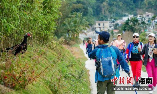 保亭户外游线路上,路边探出头来的一只家禽引起游客关注 主办方供图