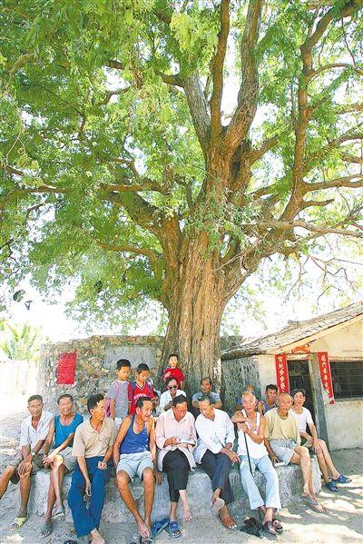 在琼南地区,村民们喜欢在酸豆树下休息。 海南日报记者 张杰 摄