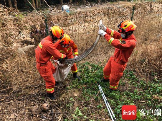 1月4日11时30分左右,三亚市消防救援支队指挥中心接到报警,位于三亚市海棠区赤田水库附近的香蕉林有一条大蟒蛇出现。