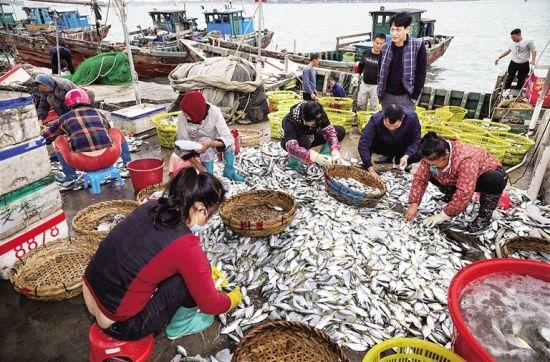 渔民忙着整理海货。