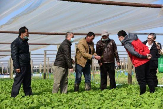 美兰区组织农技人员深入田间地头指导菜农做好防寒工作。美兰区委宣传部供图