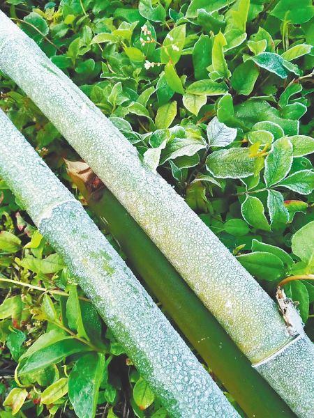 1月13日早晨,琼中黎族苗族自治县红毛镇什寒村出现结霜现象。通讯员 李庆 摄