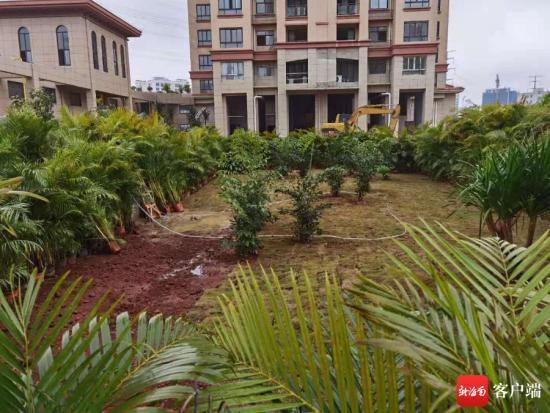 1月20日下午,记者对海口华闻书馨花苑小区游泳池回访时看到,游泳池内除了铺满草皮还栽上了树。记者 姜飞 摄