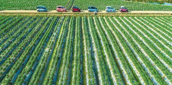 海南选择适合乡镇推广的优惠车型,举办多场新能源汽车下乡活动,有效提高了乡镇农村市场的新能源汽车量。袁琛 摄