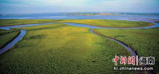 海洋森林 海口东寨港。省委宣传部供图