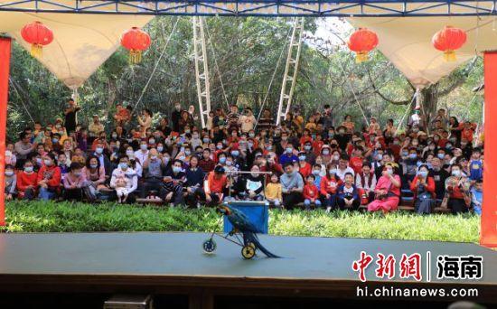 游客在定安海南热带飞禽世界观赏鹦鹉的精彩表演。定安融媒体中心供图
