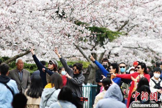 游客在青岛中山公园的樱花树下翩翩起舞,享受美好春光。王海滨 摄