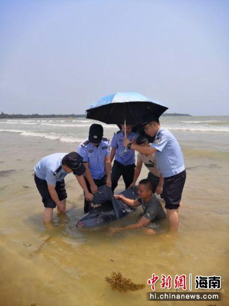 琼海海岸警察联合多部门救助搁浅鲸鱼。海岸警察供图