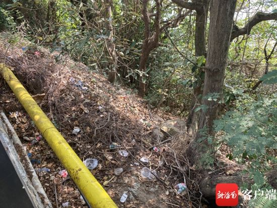 太阳湾路旁树林中的垃圾。记者 张宏波 摄