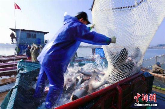 资料图:湖南大湖冬捕季,工作人员在船上清点刚刚收获的活鱼。 周翔 摄