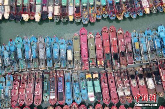 资料图:南海进入伏季休渔期,广西北海千帆归港。 王伟臣 摄